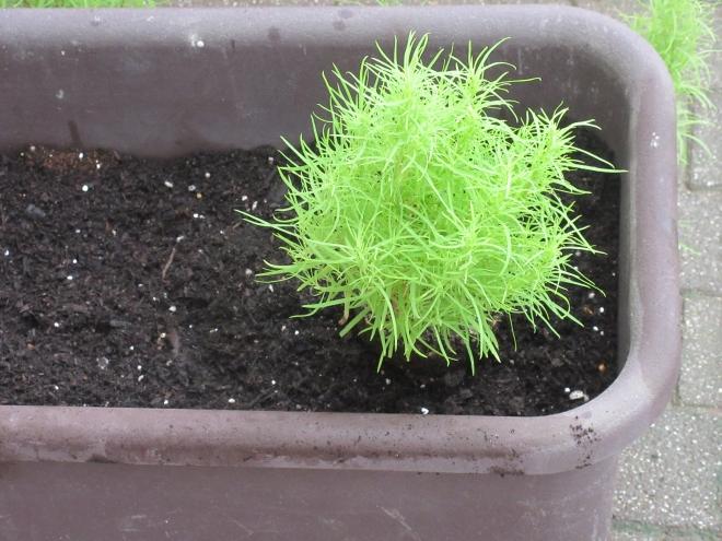 h300901 秋の花を植えよう4