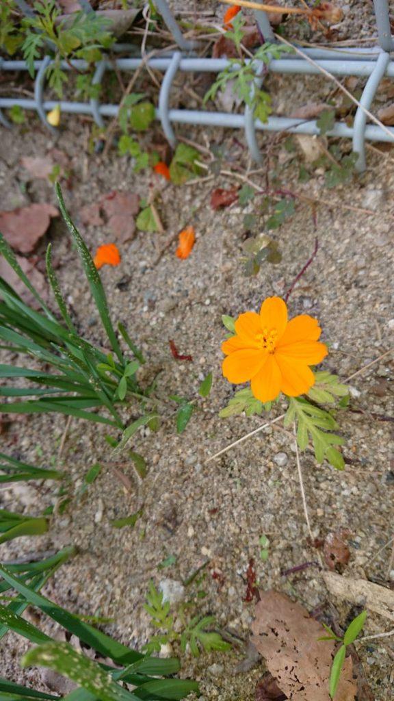 H301118 花だより1