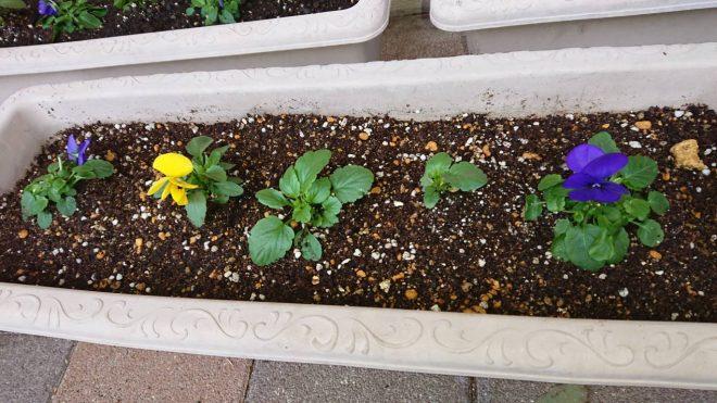 h301214 花プロ「春の花を植えよう4-2