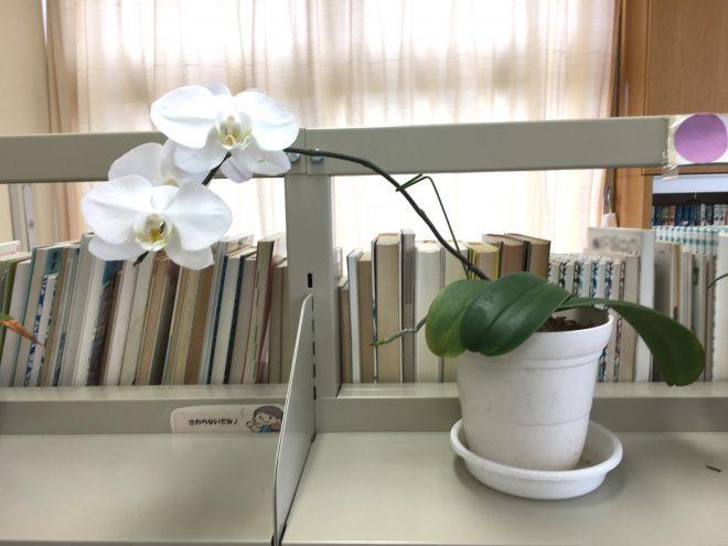 H290826 ランの花1