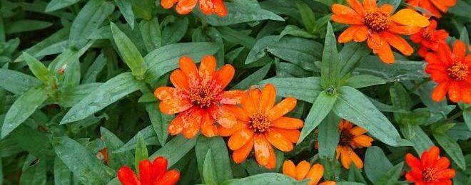H2911016 オレンジの花