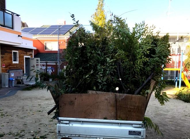 H291026 高木剪定1