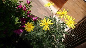 H300423 花だより2