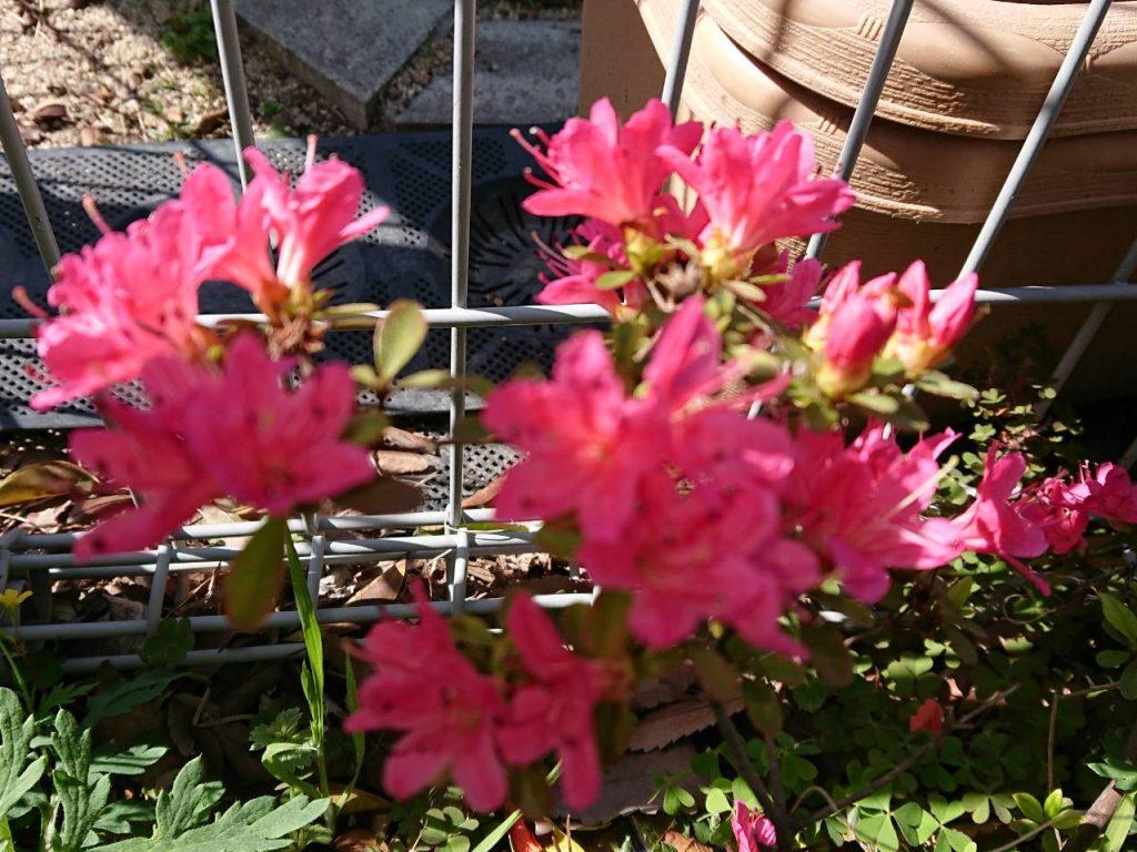 H300423 花だより3