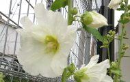 H300527 花だより1