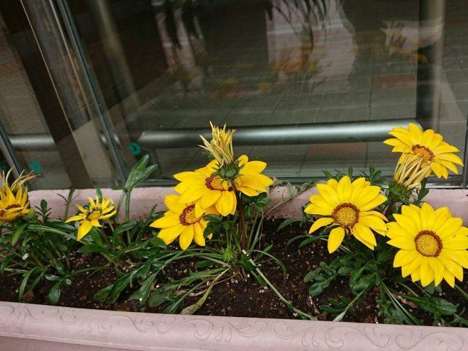 H300527 花だより4