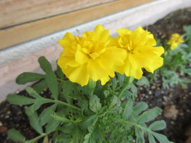 H300713 花植え5-1