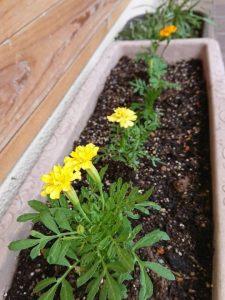 H300713 花植え5-2