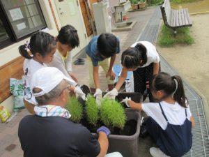 h300901 秋の花を植えよう5-2