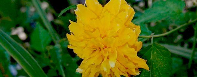 20190911 9月の花だより1